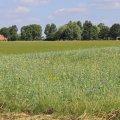 Artikel in 'Nieuwe Oogst' over thema-avond NatuurInclusief Boeren