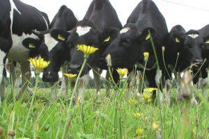 Kennisbijeenkomst meerwaarde kruidenrijk grasland