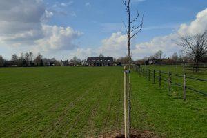 1 boom mot kun'n in Gemeente Montferland