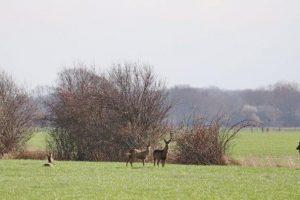 Agrarisch natuur beheer op een gangbaar melkveebedrijf.